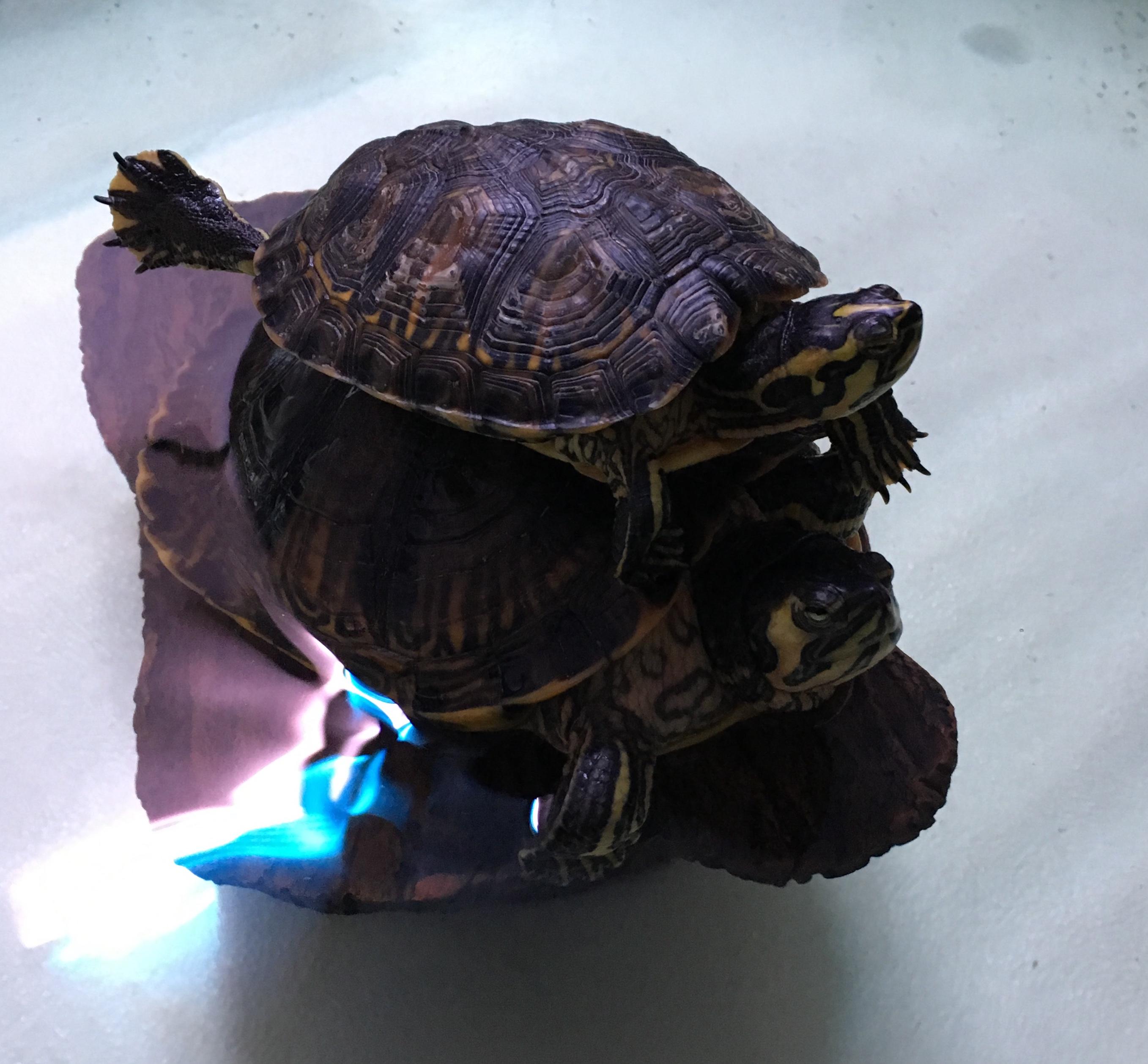 tartarughe in pensione